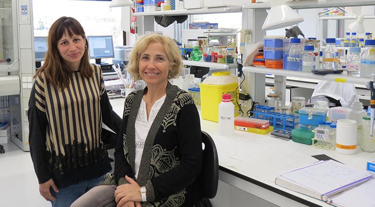 Investigadores de la UIC revelan el impacto que tienen los nutrientes sobre la actividad de las neuronas