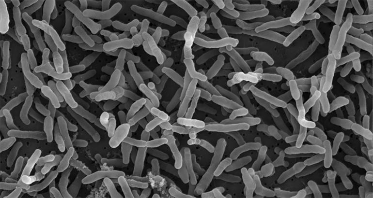 Ordesa informa sobre los beneficios inmunológicos y de la función gastrointestinal con la adición del prebiótico OraftiSynergy1