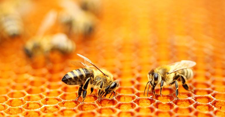 Flavoxale, ingrediente funcional a base de própolis, miel y aceite esencial de Manuka.