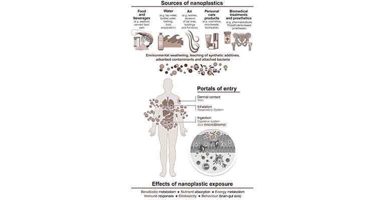 efectos de los nanoplásticos en la microbiota